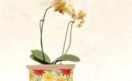 orquideas2