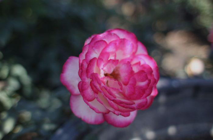interior con flor..